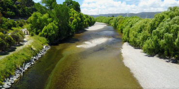 Toxic algae in the Hutt River
