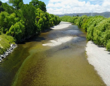 Toxic algae in the Hutt River