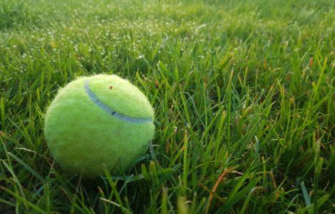 A tennis ball on a lawn