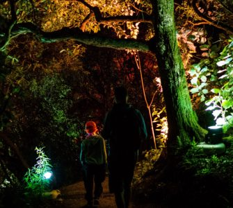 Man and boy walking through illuminated forest