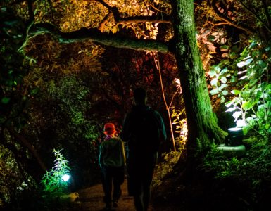 Man and boy walking through illuminated forest
