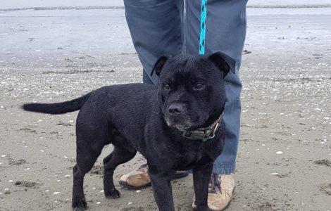 Rocko Dog Beach Leash