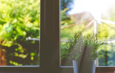 Sunlight through a window on a small potted plant