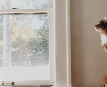 cat sits next to a window inside a house