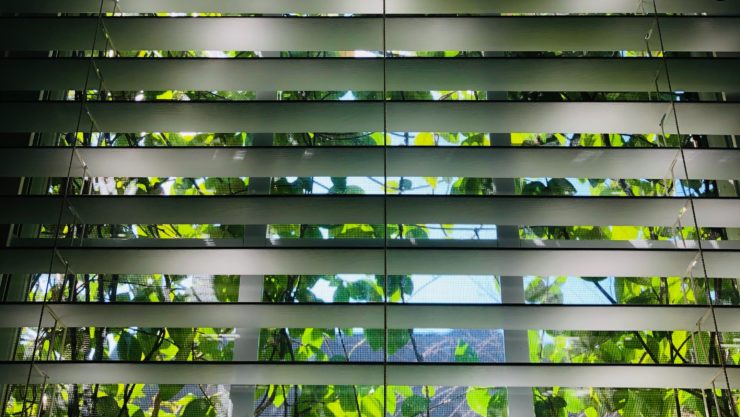 window blinds half open with leaves visible through the window