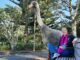 Woman sits on a park bench nexto a life-size crocheted moa.
